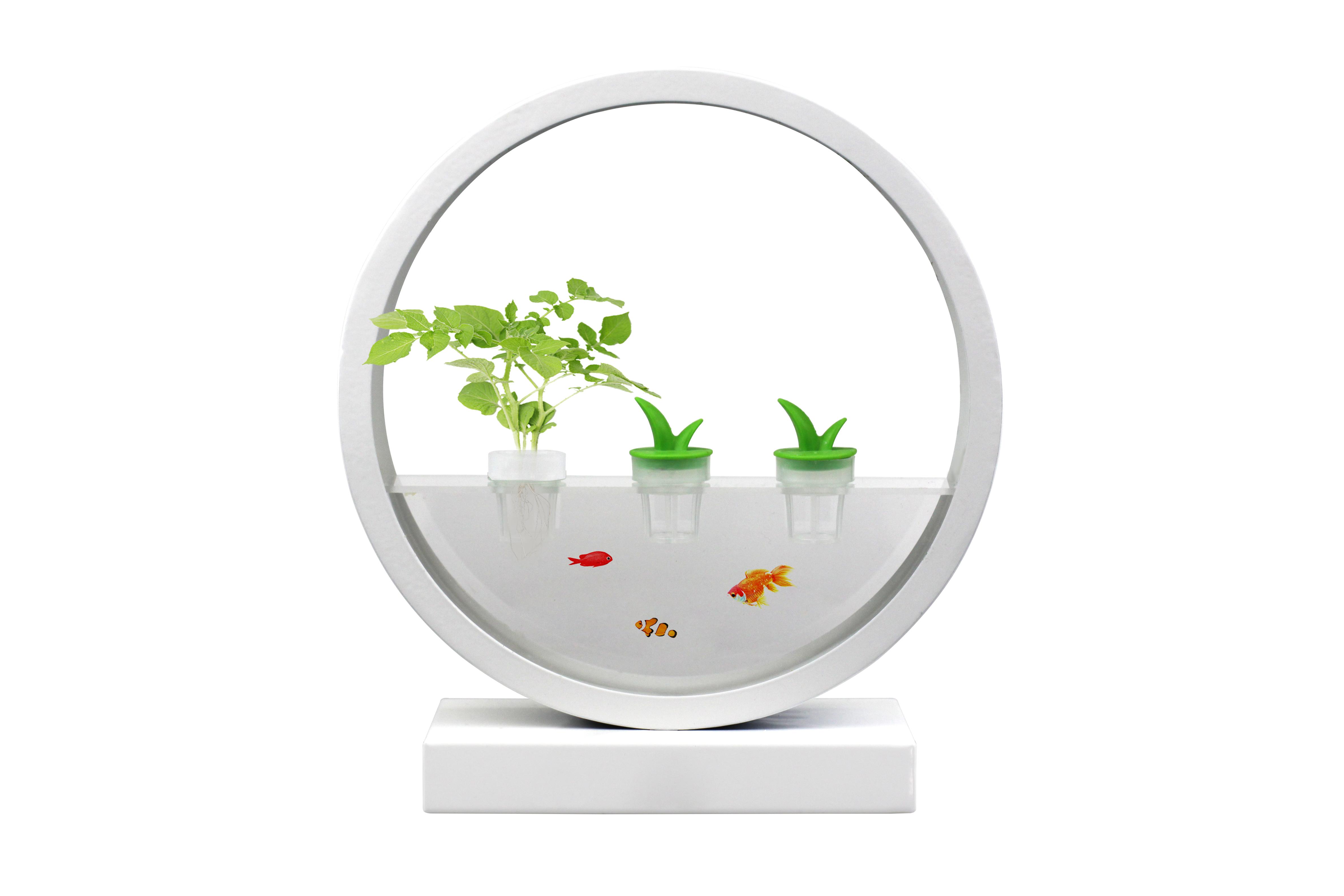 VegeBOX Fish Round Vegebox planting machine with EU plug, white